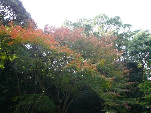 岩上(いわがみ)神社/4月:春祭り