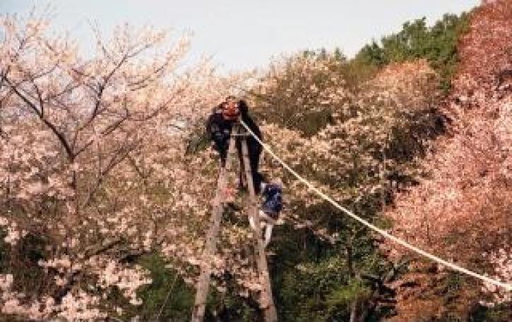 伊勢の森神社/4月:伊勢の森神社大祭