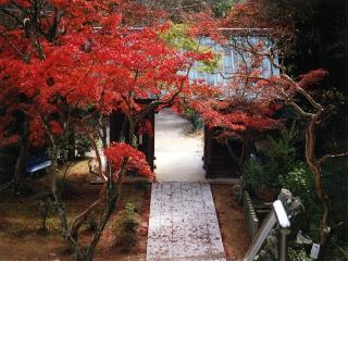 東山寺/11月:もみじまつり